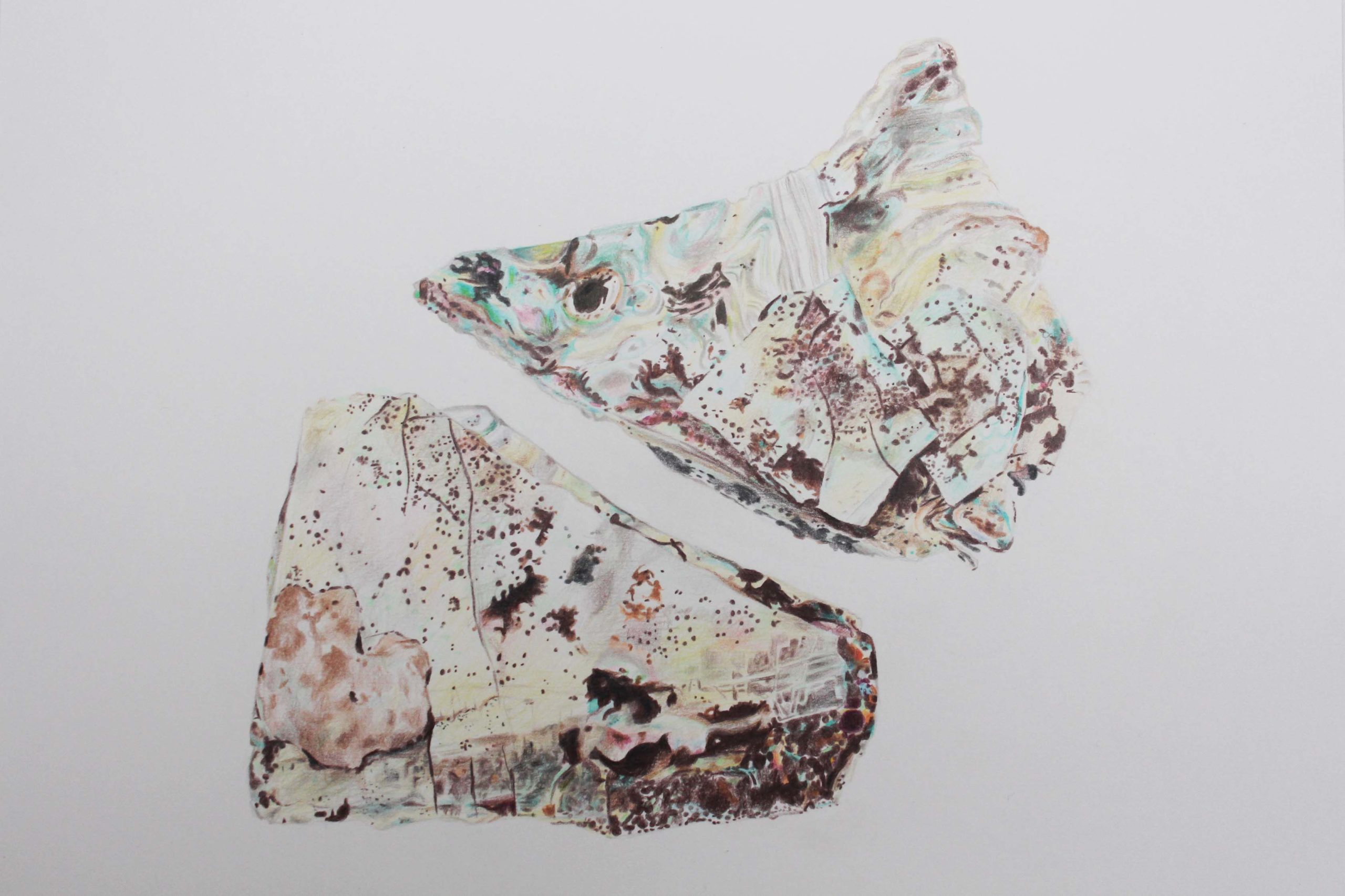 Two Fragments coloured pencil drawing by Abi Spendlove